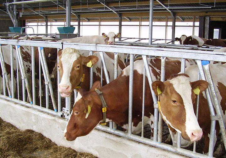 Закупуване и модернизация на млекодобивно стопанство