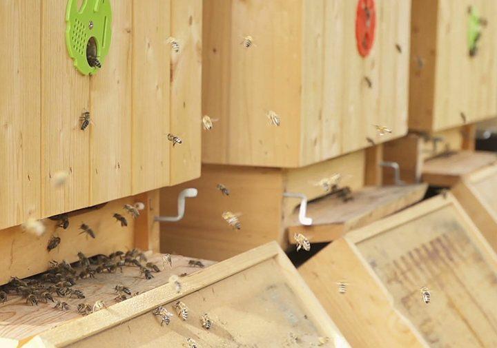 Създаване на пчелно стопанство