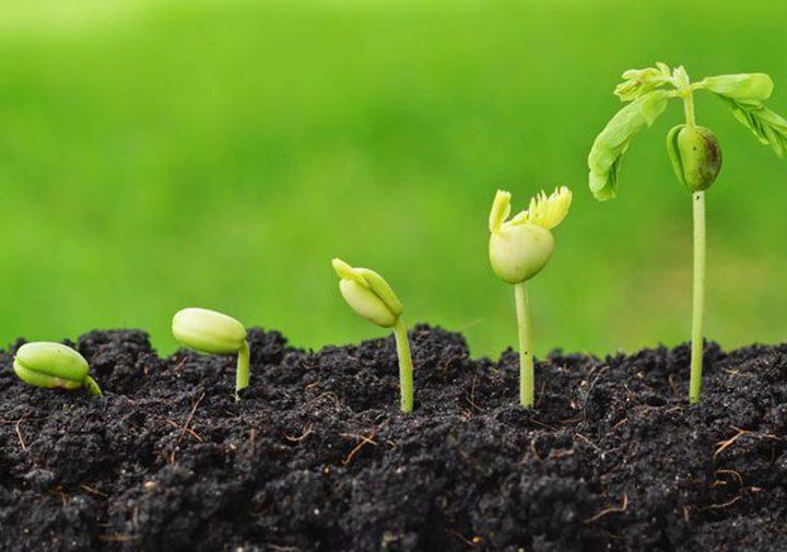 """Проекти на """"СИ ЕМ ЕН ПРОДЖЕКТС"""" ЕООД бяха одобрени за финансиране от Разплащателна агенция към ДФ """"Земеделие"""""""