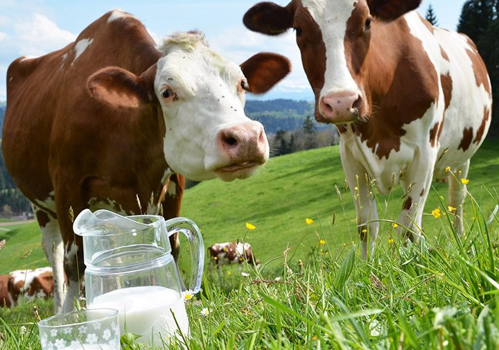 Европейски стандарти в говедовъдството
