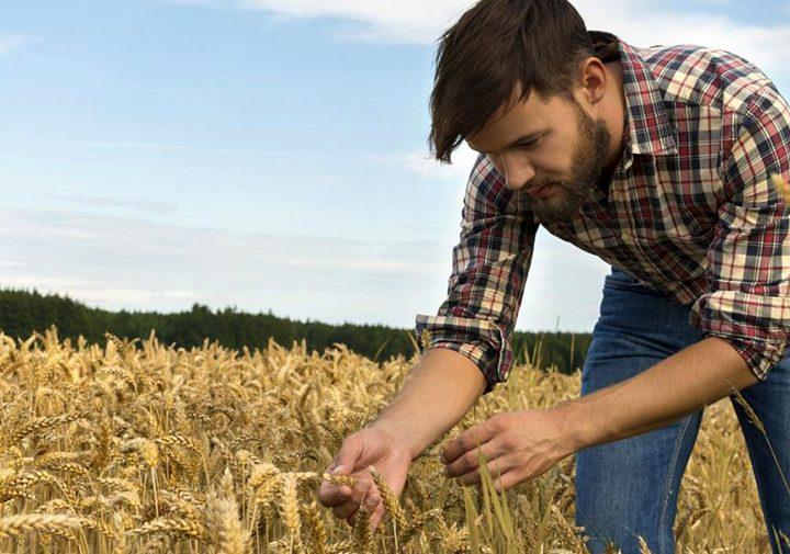 """До началото на месец юни тази година ще бъде отворена мярка """"Млад фермер"""""""